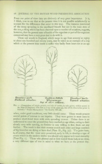 Journal of the British Wood Preserving Association Vol IV : Page 60