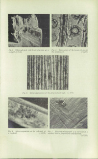 Record of the 1955 Annual Convention of the British Wood Preserving Association : Page 171