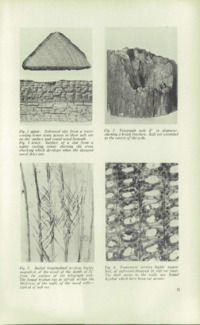 Record of the 1955 Annual Convention of the British Wood Preserving Association : Page 31