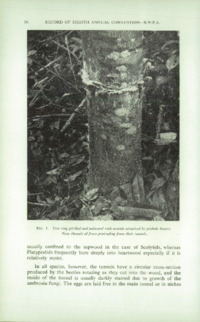 Record of the 1958 Annual Convention of the British Wood Preserving Association : Page 106
