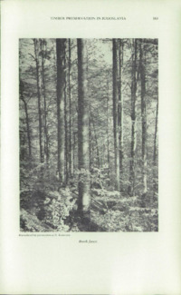 Record of the 1961 Annual Convention of the British Wood Preserving Association : Page 179
