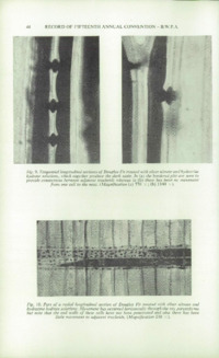 Record of the 1965 Annual Convention of the British Wood Preserving Association : Page 54