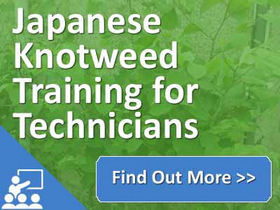 Technicia Training - Japanese Knotweed