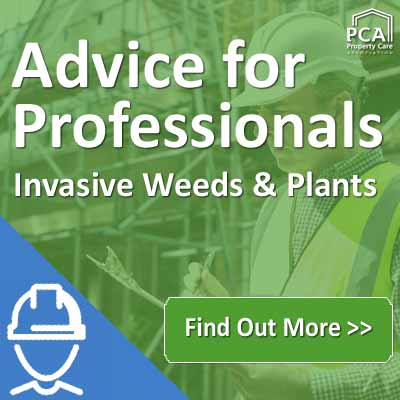 Invasive Species Week - Advice for Property & Construction Professionals